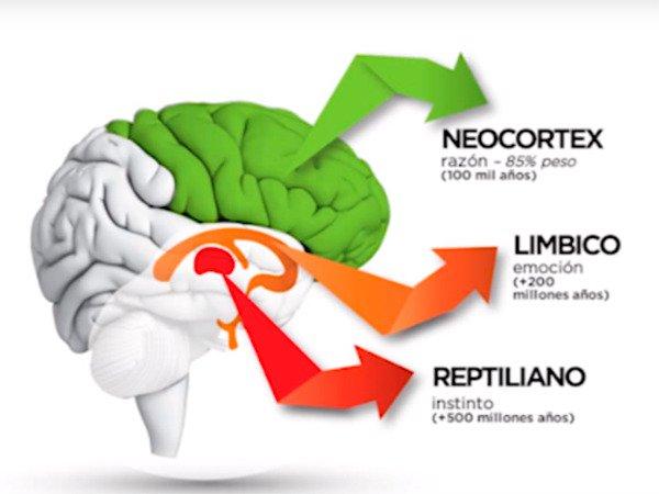 Resultado de imagen de el cerebro límbico